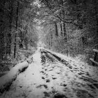 Las w zimie