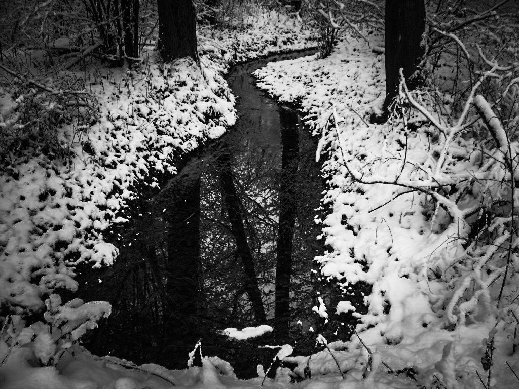Zima w lesie 4